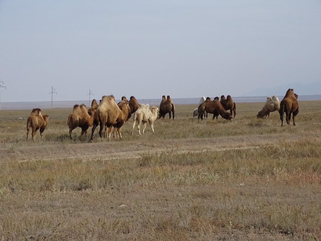 The Steppe, Kazakhstan