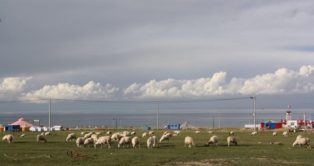 Qinghai Lake, Qinghai Province, China
