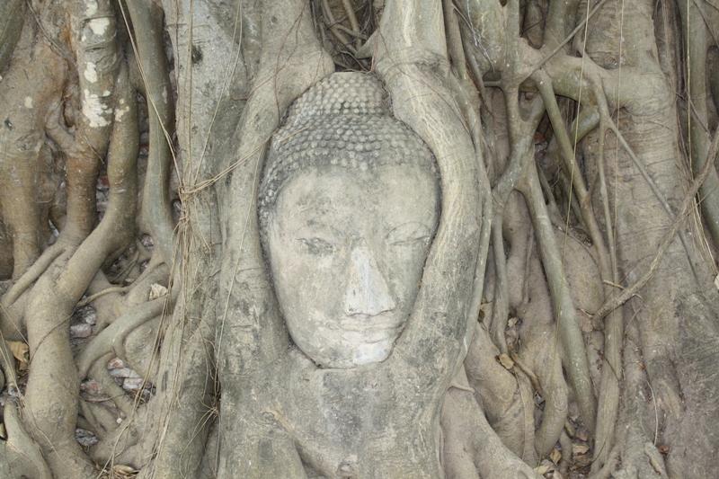 Aythaya, Thailand