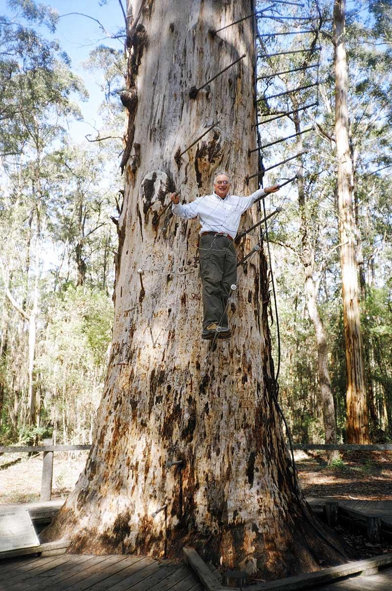 Diamond Tree Lookout, SW Australia