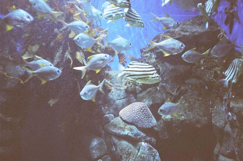 Aquarium, Perth, Australia