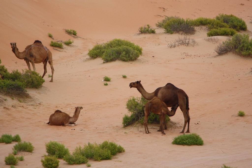Moreeb Hill Sand Dunes, (Tal Mireb) Abu Dhabi, United Arab Emirates