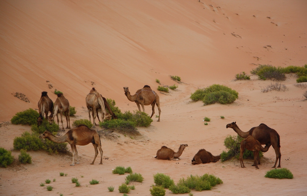 Moreeb Hill Sand Dunes, Abu Dhabi, United Arab Emirates